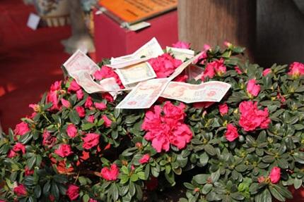 ...ngọn hoa... Ảnh: Dân trí