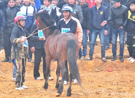 Phải nhờ đến người hỗ trợ, chú ngựa mới được giữ lại còn nài ngựa dù bị rách quần...