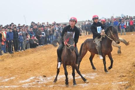 Xem vó ngựa Bắc Hà đua tranh ngay tại thủ đô Hà Nội
