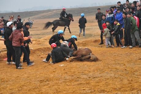 ...khiến người, ngựa ngã nhào. Ngay lập tức những nài ngựa khác chạy lại giúp đỡ.