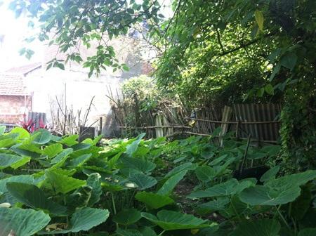 Phần đất đang xảy ra tranh chấp tại xã Đại Mỗ từ nhiều năm qua
