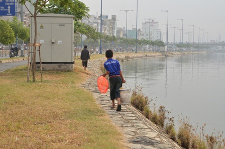 Những chú cá chép vừa được thả ra thì bị người dân bắt lại