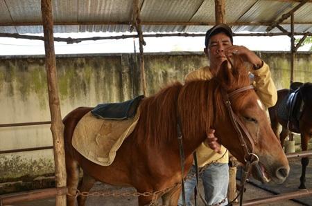 Các nhân viên mang yên và thắng dây cương cho ngựa