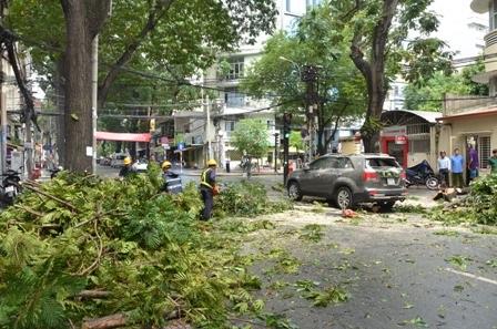 Hiện trường vụ cây xanh đè 2 xe ô tô ở trung tâm TPHCM