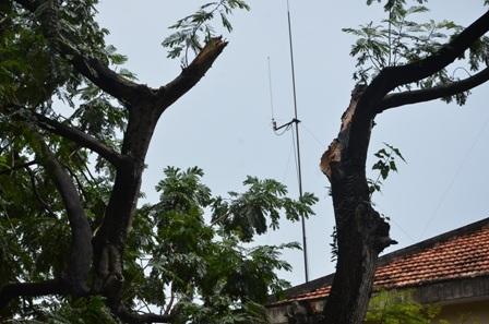 Phần thân cây bị gãy nhánh