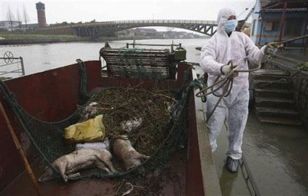 Scandal lợn chết trôi sông càng khiến người nước ngoài tại Trung Quốc lo sợ