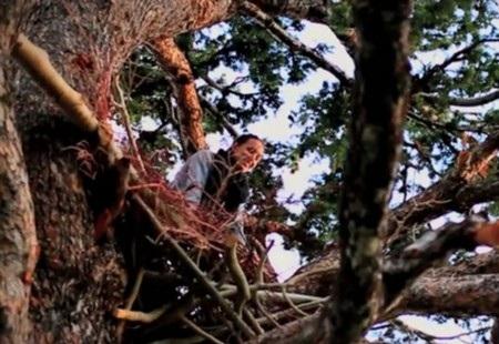 Summit đã dựng một tổ chim đủ cho người ngủ trên ngọn cây