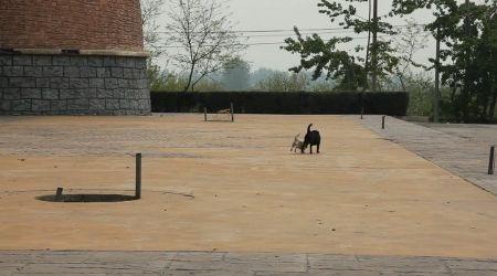 Chó chạy tung tăng trên công viên rộng lớn