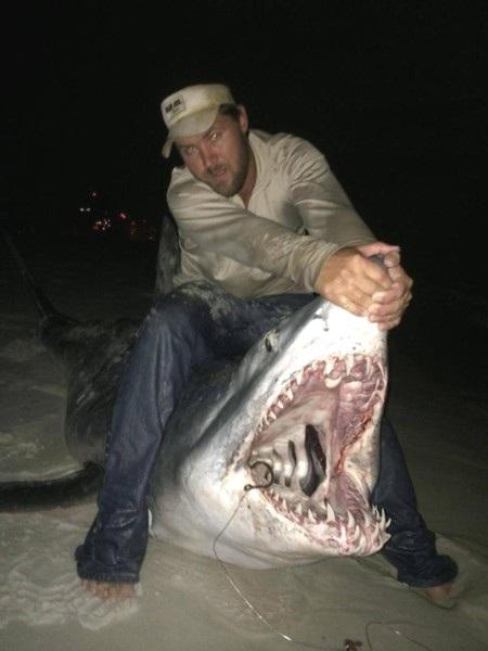 Con cá mập được xẻ thịt và nướng cho 200 người ăn