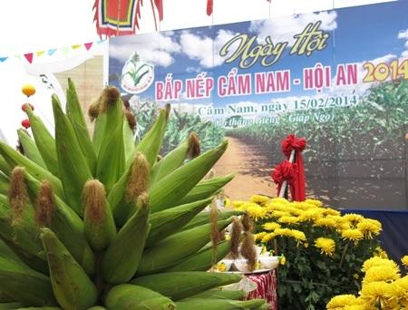 Lễ hội Bắp thu hút đông đảo người dân và du khách về với làng Cẩm Nam( Hội An, Quảng Nam)
