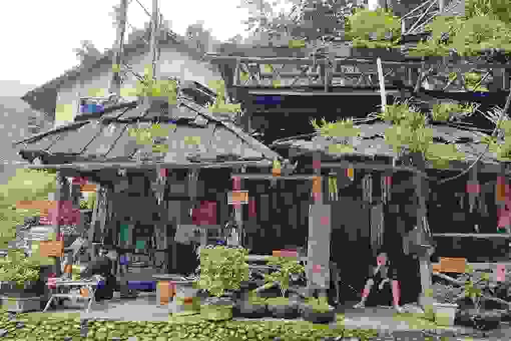 Bản làng mộc mạc nhỏ xinh ở Sa Pa khiến ai cũng muốn ghé thăm