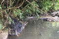 Khởi tố vụ án nước sạch Sông Đà bốc mùi, nhiễm dầu thải