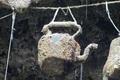 Giếng nước kỳ lạ khiến vạn vật …. hóa đá
