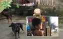 Bé trai 7 tuổi bị chó cắn tử vong khiến dư luận bức xúc