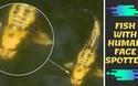 Phát hiện con cá có khuôn mặt người