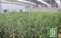 Phát triển nông nghiệp công nghệ cao ở Sa Mù, Quảng Trị.