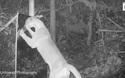 Phản ứng hài hước của các loài động vật hoang dã khi thấy mình trong gương (3)