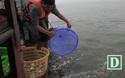 15.000 người chuyền tay phóng sinh hơn 10 tấn cá ở Hà Nội