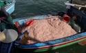 """Ngư dân Bình Định trúng """"lộc biển"""", kiếm tiền triệu chỉ vài giờ"""