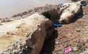 Xác cá coi 10 tấn trôi dạt vào vùng biển Bạc Liêu