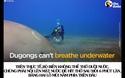 Tập tính thú vị của loài  Bò Biển – nàng tiên cá ngoài đời thực!