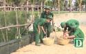 Phú Yên: Hơn 200 đoàn viên tham gia chiến dịch làm sạch bãi biển