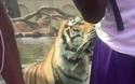 """Những khoảnh khắc động vật tại sở thú khiến du khách """"khóc thét"""""""
