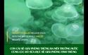 Không có não, bơi chậm hơn rùa, tại sao sứa vẫn là sinh vật thành công bậc nhất?