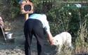Suốt 18 tháng chú chó trung thành chờ chủ ở nơi xảy ra tai nạn