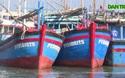 Phú Yên: Hàng trăm tàu cá nằm bờ vì vướng về hạn ngạch khai thác thủy sản