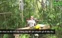 Tiếng thét đau đớn của rừng xanh Tây Nguyên.