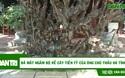 Cận cảnh bộ rễ gỗ trai tiền tỷ tuyệt đẹp của ông chủ thầu Hà Tĩnh