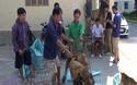 """Đường dây trộm hơn 100 tấn chó: Làm hầm """"bí mật"""" để nhốt chó"""