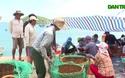 """Giá tôm hùm """"lao dốc"""" khiến người dân Phú Yên lao đao"""