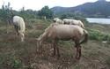 """Chàng trai 8x xây dựng trang trại ngựa bạch trên """"ốc đảo"""" Cao Nguyên"""