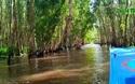 Tham quan rừng tràm Trà Sư mùa nước nổi