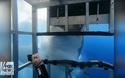 Nín thở xem khoảnh khắc cá mập trắng khổng lồ cắn, giật lồng chứa đoàn người lặn