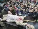 Vườn thú Đan Mạch bị lên án vì phanh thây sư tử trước mặt trẻ em