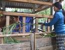 Dự án Giảm nghèo Khu vực Tây Nguyên: Mô hình thoát nghèo bền vững