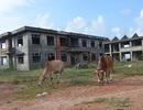 Xây dựng trung tâm dạy nghề kiểu mẫu cho... bò rong chơi