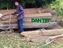 """Lâm tặc """"đại phẫu"""" rừng: Bảo vệ rừng được """"bôi trơn""""?"""