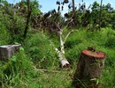 Sẽ xử lý các cán bộ để mất rừng tại VQG Yok Đôn