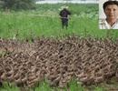 Cuộc truy bắt têm trộm sừng sỏ dưới vỏ bọc người chăn vịt