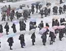 Bão tuyết tấn công Nhật Bản, 300 chuyến bay bị hủy