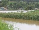 Thủy điện xả lũ nhấn chìm nhà cửa, vườn ruộng của người dân
