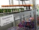 Nhập nguyên liệu hết hạn để sản xuất nước hoa, mỹ phẩm