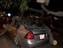 Cây xanh bật gốc đè 2 ô tô, 8 người thoát chết