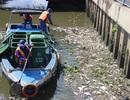 Cá lại chết trắng kênh Nhiêu Lộc - Thị Nghè