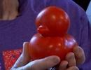 Quả cà chua giống y hình con vịt