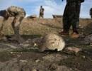 Phát hiện các hố chôn tập thể ở thành trì của IS tại Iraq